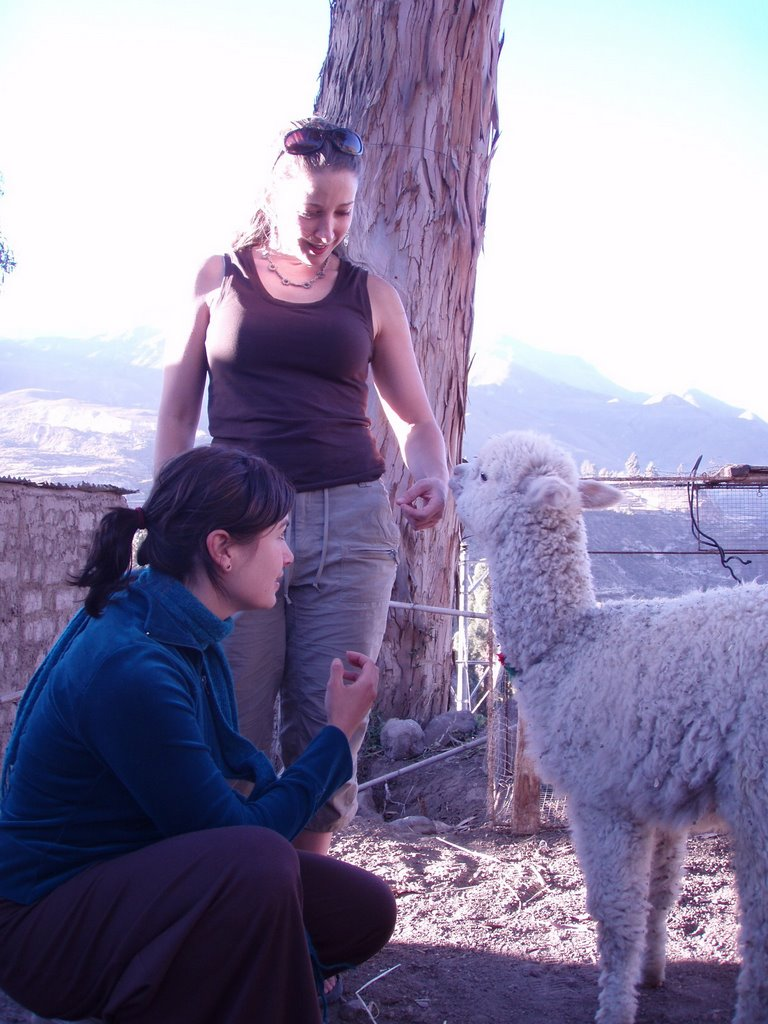 Top 10 Lessons Learned in Peruvia