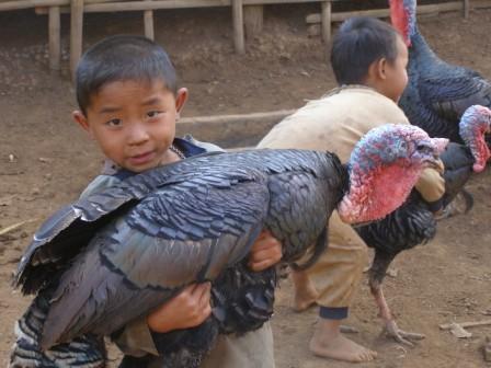 The Turkey Trek