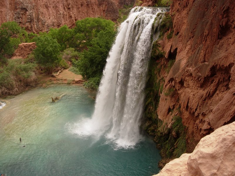 Where the Wild Things Are: Havasu Falls
