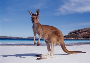 Australia: A Laid-Back & Down-to-Earth Country