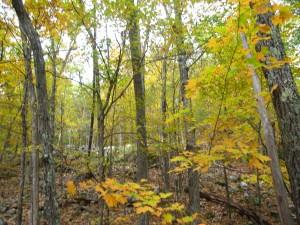 Adirondack Fall Hike